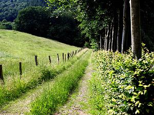 Weg zwischen Feld und Wald