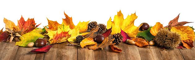 Drachen im Herbst