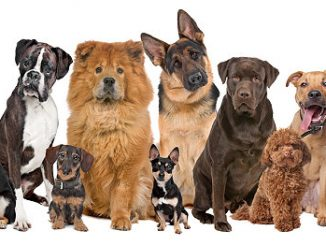 Verschiedene Hunde