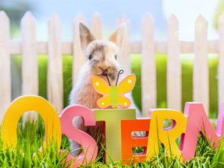 Das Wort Ostern und ein Osterhase