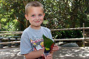 Ein Junge füttert einen Papagei im Tierpark