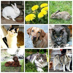 Haustiere Für Kinder Und Familien