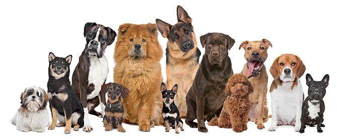 Hunde Als Haustiere F R Familien Kosten Anschaffungen