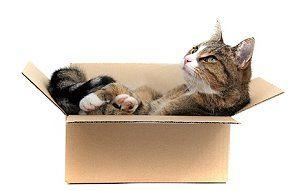 umzug mit haustieren tipps f r katzen hunde und co. Black Bedroom Furniture Sets. Home Design Ideas